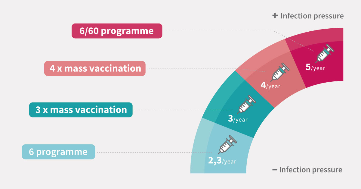 PRRS vaccination programs for sows