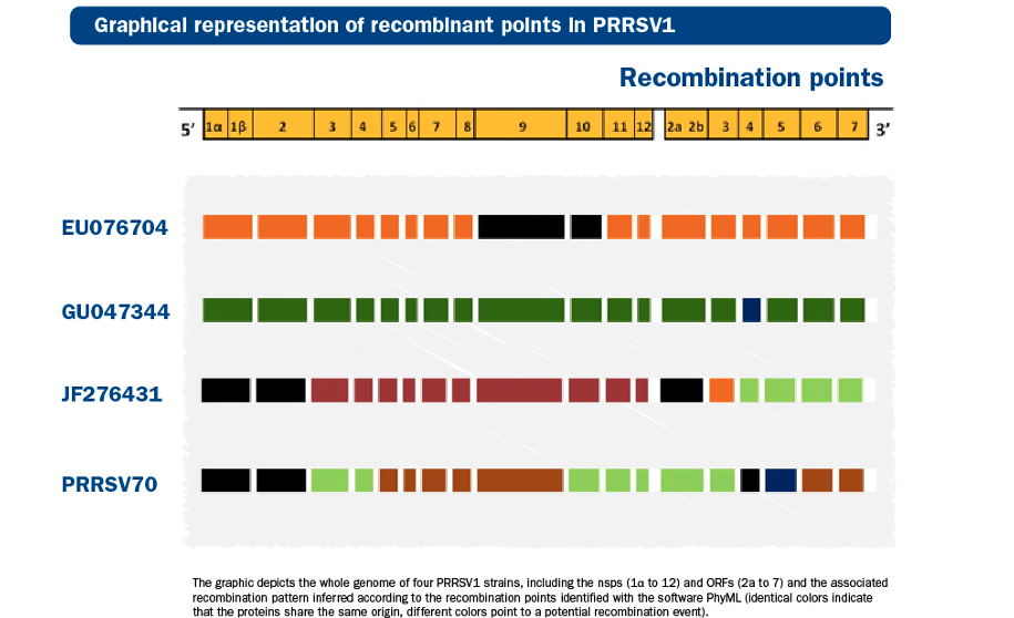 recombinant points in PRRSV1
