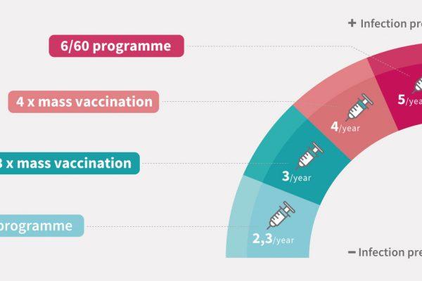 Programas de vacunación contra el PRRS para cerdas