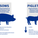 Is blanket vaccination of the sow herd 4 times a year the best for controlling PRRS? If so, do I need to vaccinate the progeny?